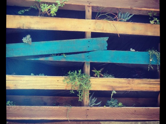 recycling pallets into planters
